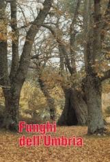 Funghi dell'Umbria